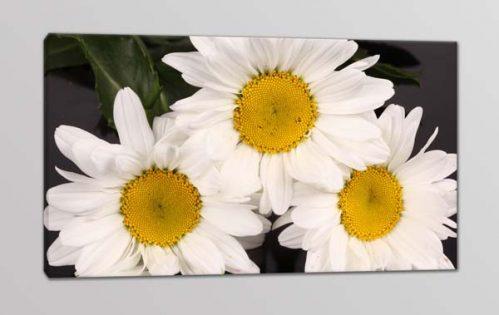 quadro moderno stampa fiori margherite