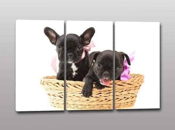 quadri moderni cuccioli simpatici-cagnolini