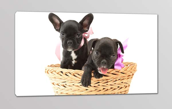 quadro moderno cuccioli cagnolini