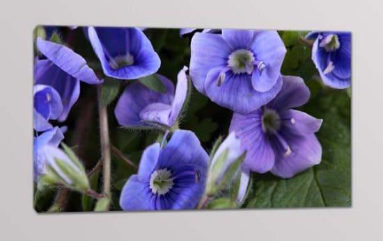 Quadro moderno arredo stampa fiori