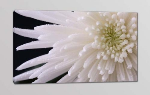 Quadro moderno fiore stampa tela arredo