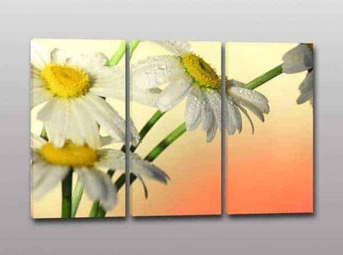 Quadri moderni fiori margherite stampa tela