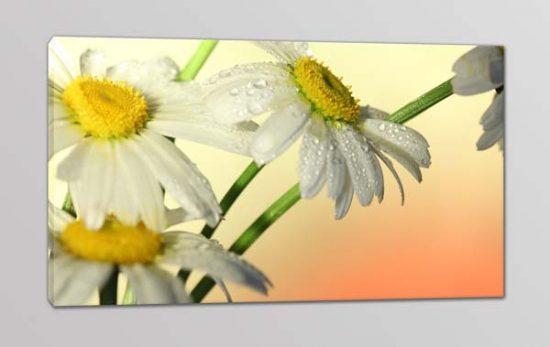 Quadro moderno fiori margherite stampa tela