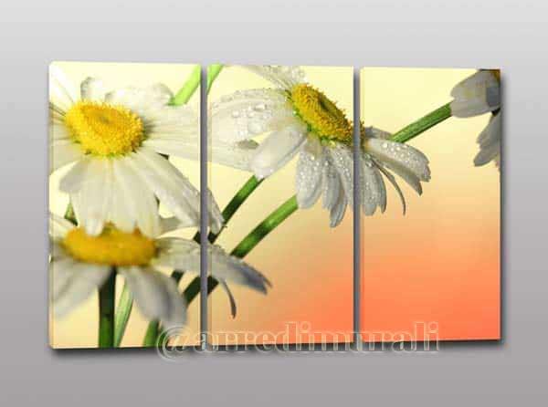 quadri moderni con fiori margherite