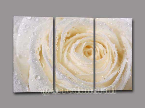 Rosa bianca stampa su tela