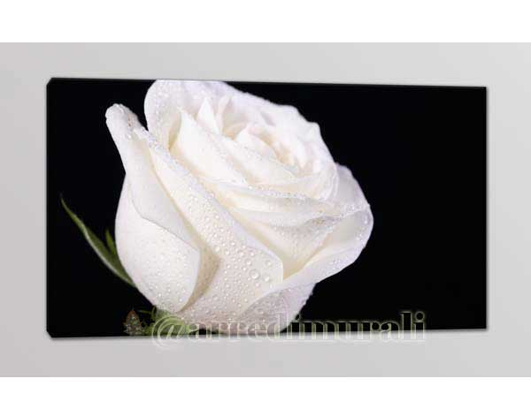 Rosa bianca quadro moderno di Arredi Murali