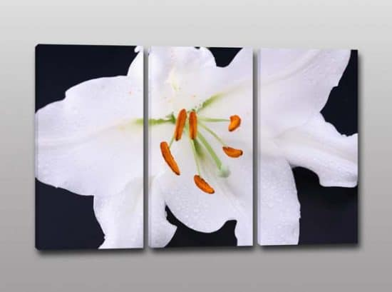Quadri moderni stampa digitale su tela fiore bianco