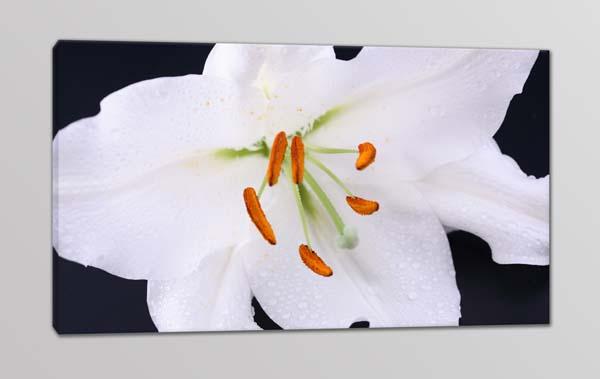 Quadro moderno stampa digitale su tela fiore bianco