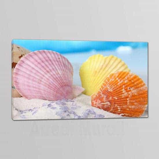 quadro su tela con stampa conchiglie
