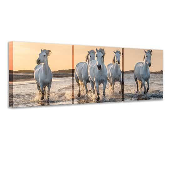 Quadri su tela con cavalli bianchi